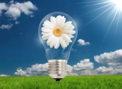 Flower inside bulb