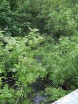 River Stour downstream of Furnace Hill © John M
