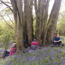 forest school training image of people sat around a tree amongst the bluebells