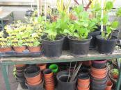 Hillside-Herbs-plant-pots