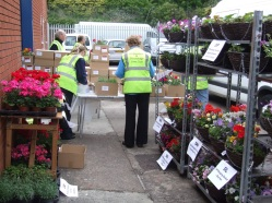 Kingswinford-Stourbridge-Lions-Club-Plant-Sale