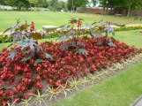 Stevens-Wollescote-Park-Stourbridge-Flower-Bed-Begonias
