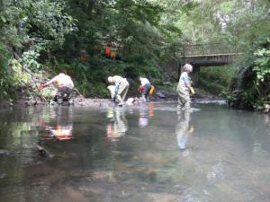 River Stour Clean-up Event, Richardson Drive, Amblecote, Stourbridge